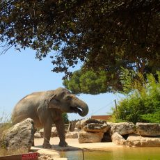 Zoo Barben Provence
