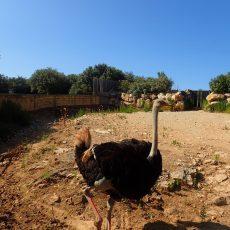 Zoo Barben Provence